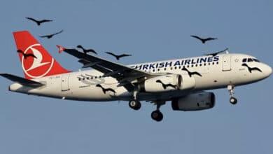 Photo of İstanbul'da kuş hareketliliği