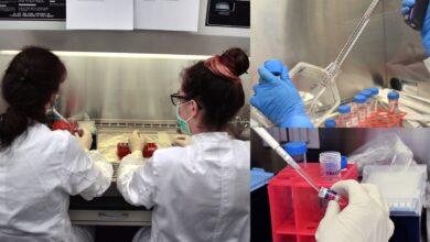 Photo of Zürih Üniversitesi ve Airbus, minyatür insan dokusu üretiyor